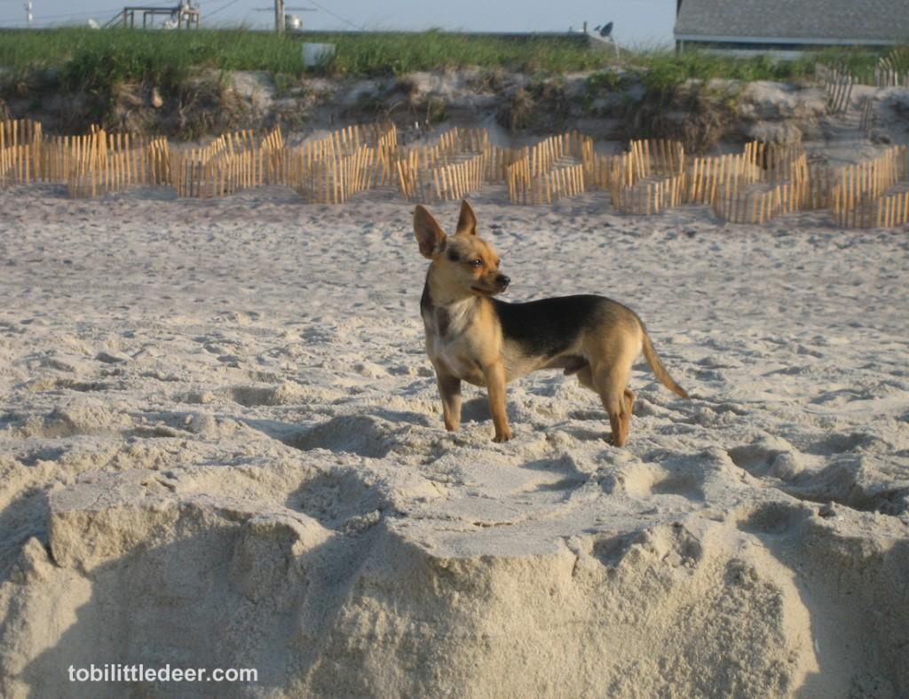 IMG_9179 Tobi on beach cliff s-br