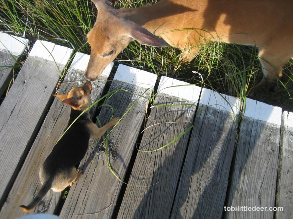 IMG_9000 Tobi & Deer nose-kissing s-br