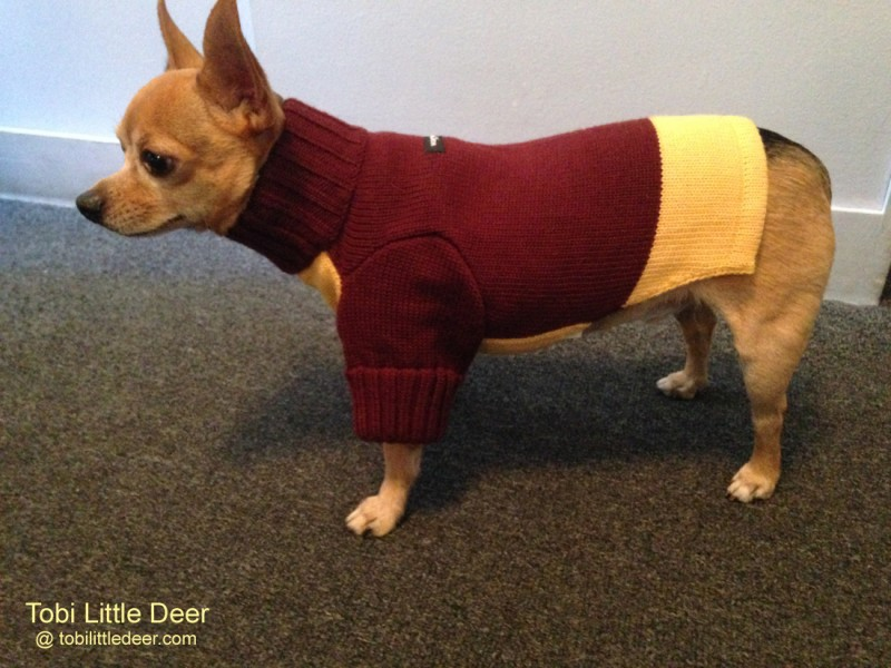 Maroon/yellow Wagwear sweater